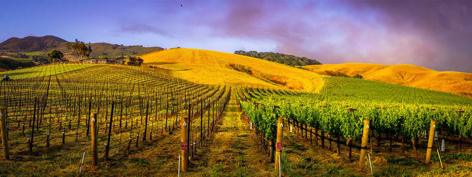 Wineries Santa Ynez Valley Affordable Lodging in Buellton California Clean Comfortable Rooms Newly Remodeled Close to Downtown